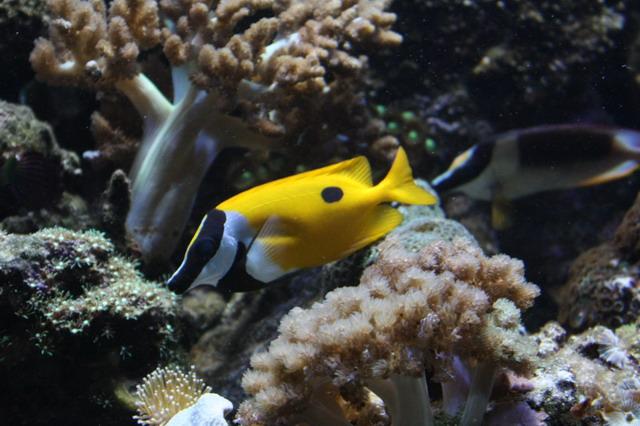 очарование подводного мира
