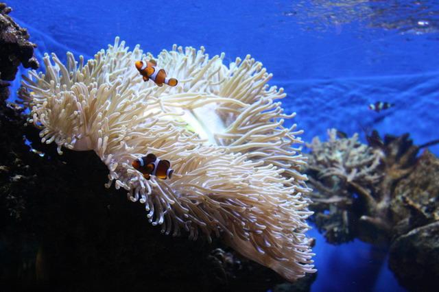 Барселона - необыкновенный аквариум