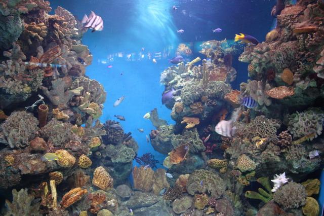 средиземноморский аквариум