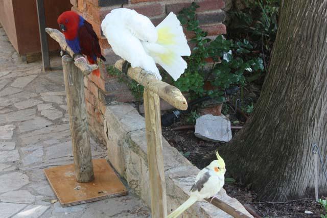 Marimurtra попугаи