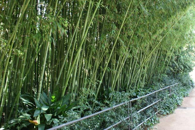 Marimurtra бамбук