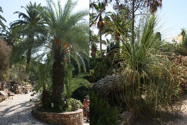 Marimurtra разные растения