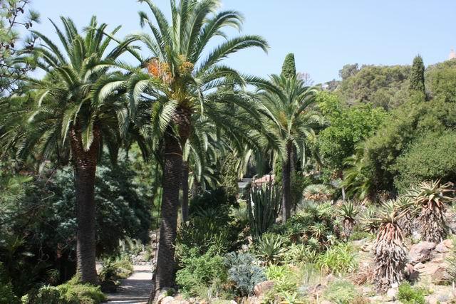 Marimurtra пальмы