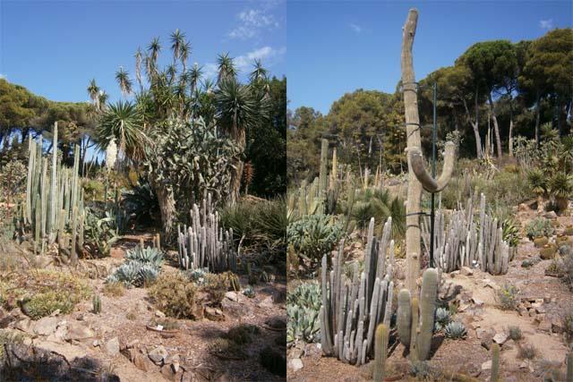Marimurtra растения разные