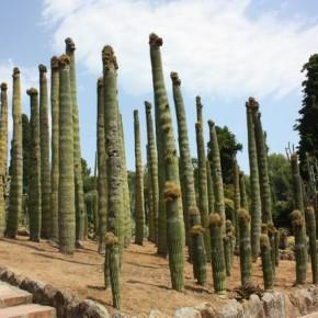 Пинья де Роса — ботанический сад в Бланесе
