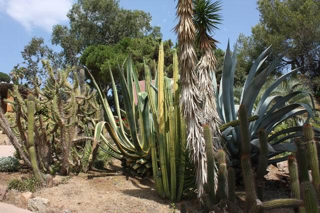 Pinya de Rosa парк