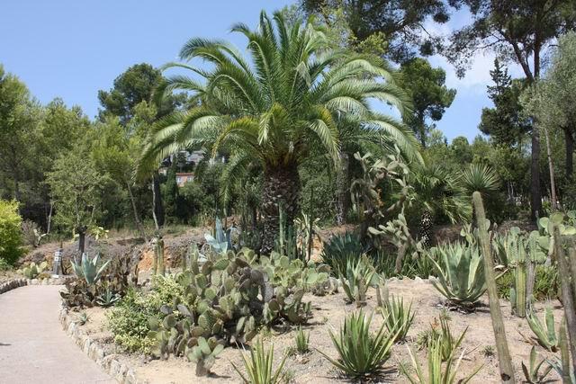 Pinya de Rosa пальмы