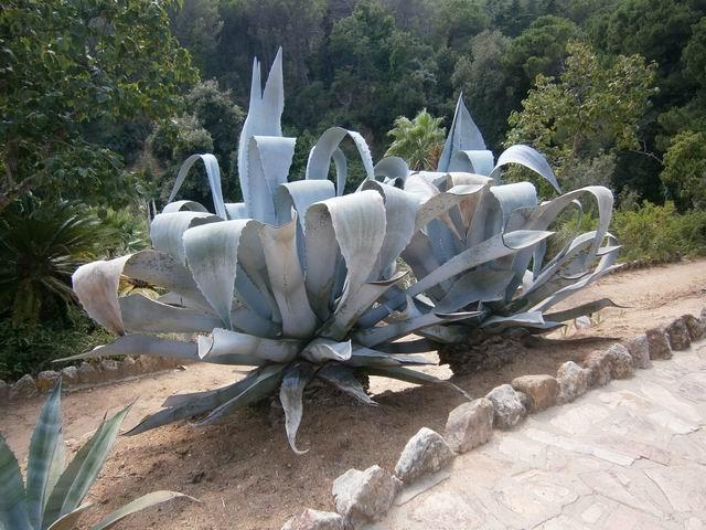 Pinya de Rosa разные растения