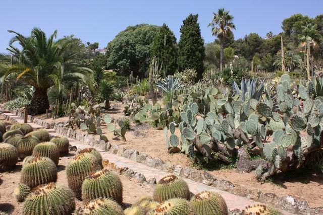 Pinya de Rosa тропинка между кактусами