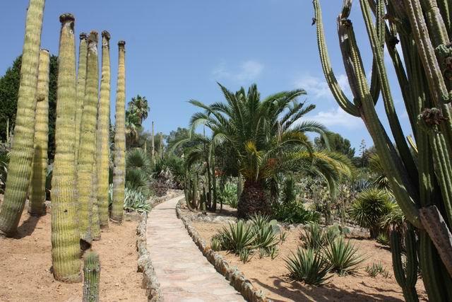 Pinya de Rosa тропинка в кактусах