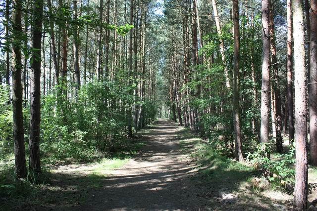 Собешевский остров тропа в лесу