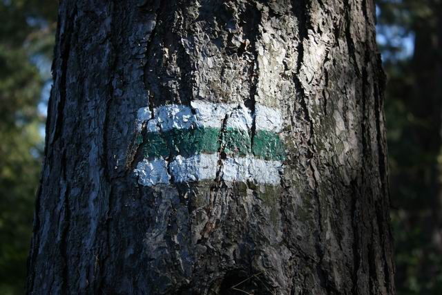Собешевский остров метки на деревьях