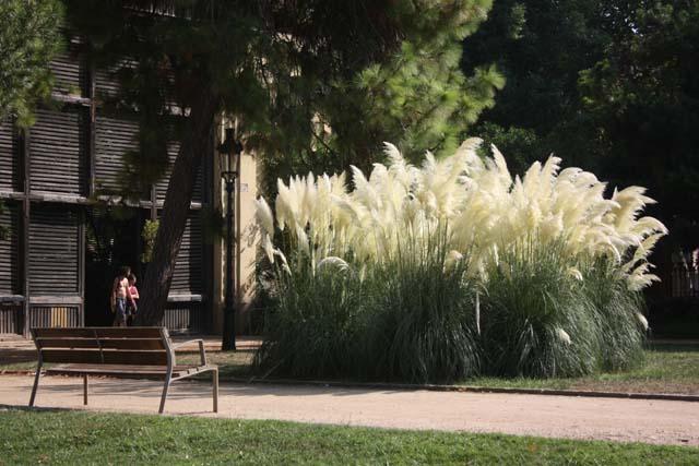 парк Цитадели растения