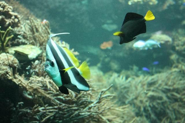аквариум Вена