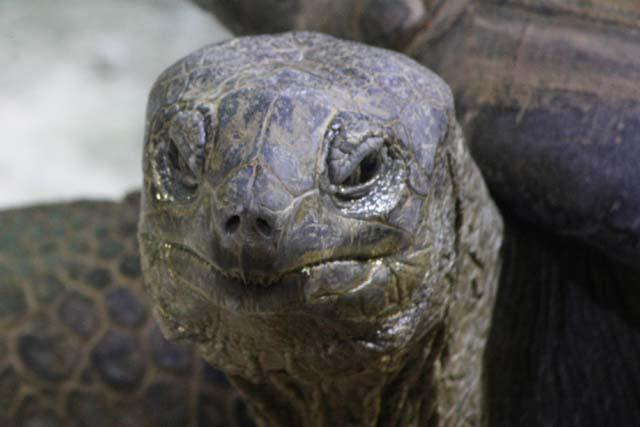 голова черепахи фото