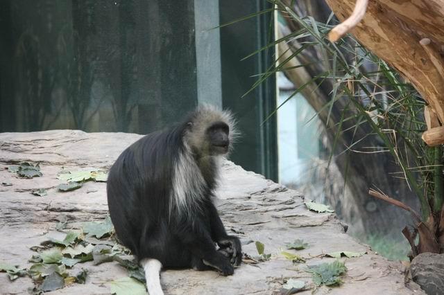 Вена зоопарк приматы