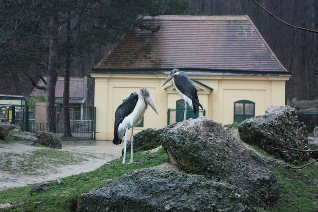 Вена зоопарк птицы