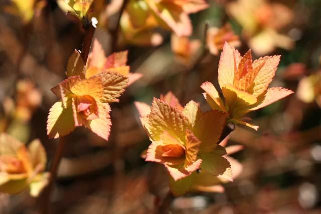 весенние листочки