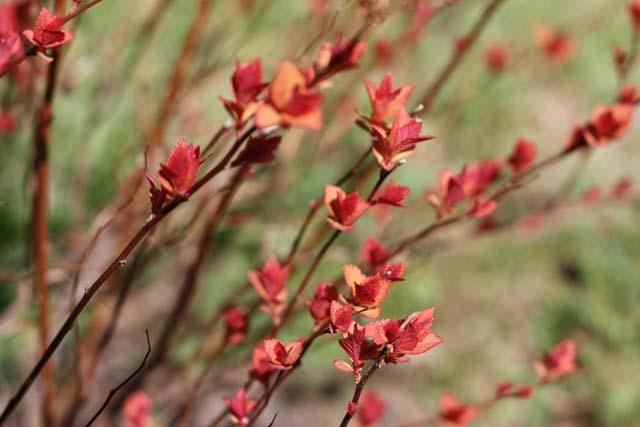 ботанический сад весна