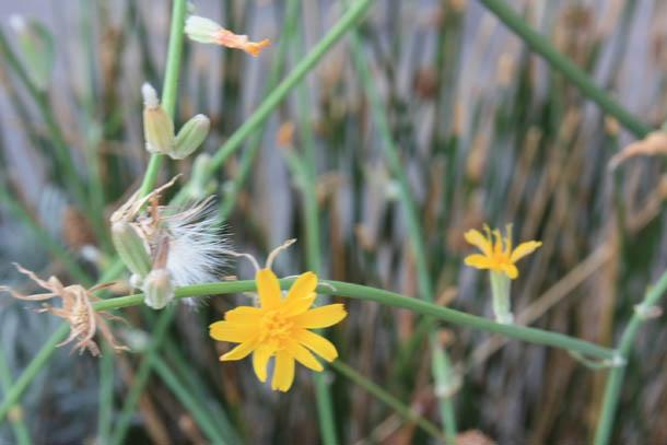 полевые цветы Греции фото