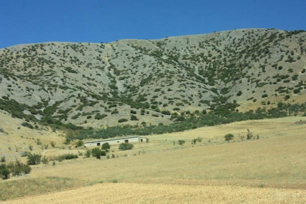 растительность на горах