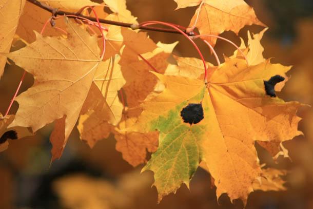 осенние листья в лесу