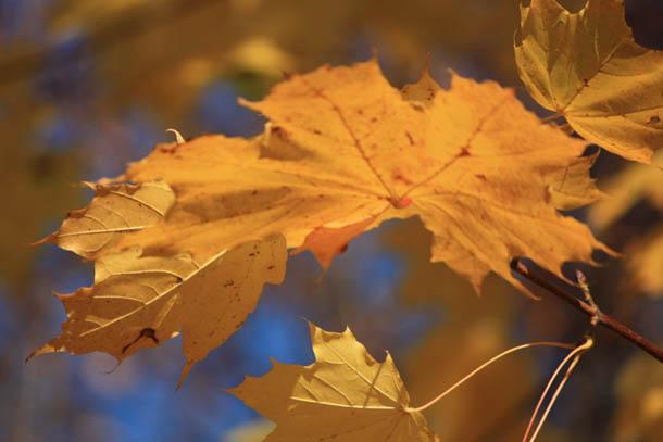 Осенние листья на фоне неба