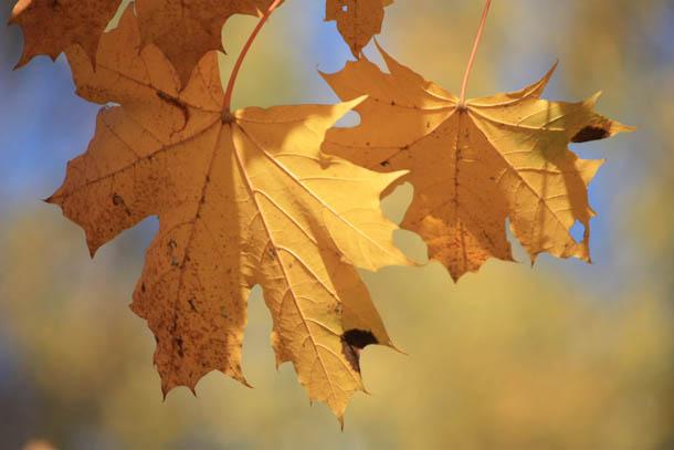 листья на размытом фоне