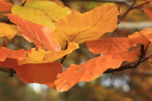желто-красные листья