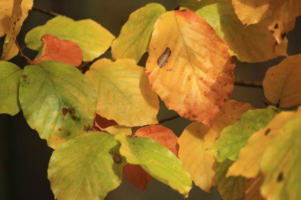Краски осени - желтые, красные и зеленые