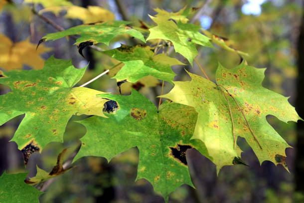 зеленые листья осенью