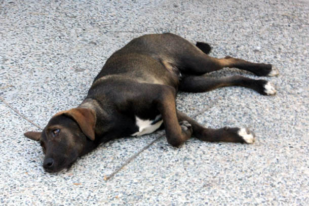 собака лежит на солнышке