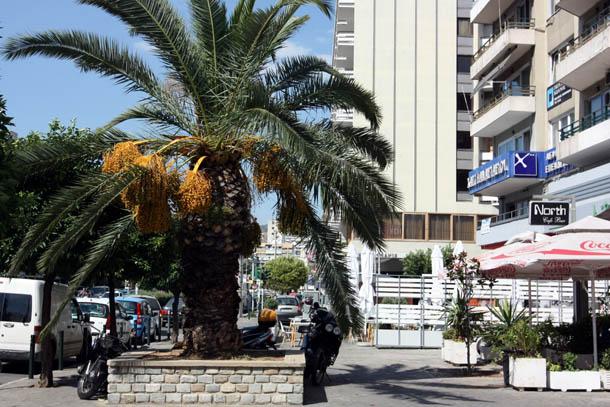 Пальмы на улице