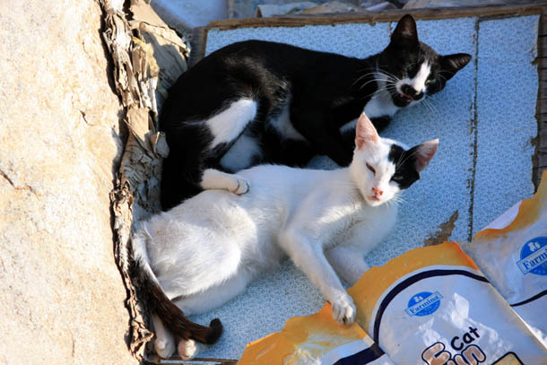 коты на солнышке
