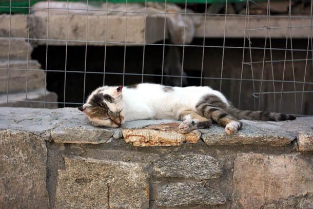 Ленивый кот на солнышке