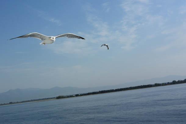 2 чайки над морем