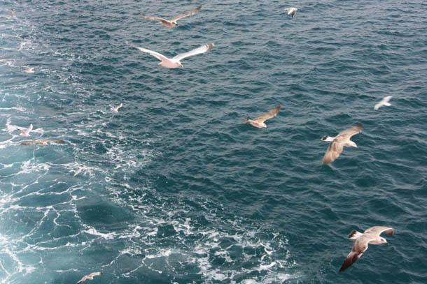 Чайки над гладью моря