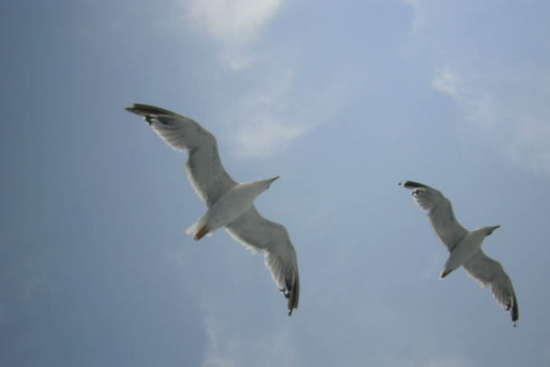 две чайки в небе