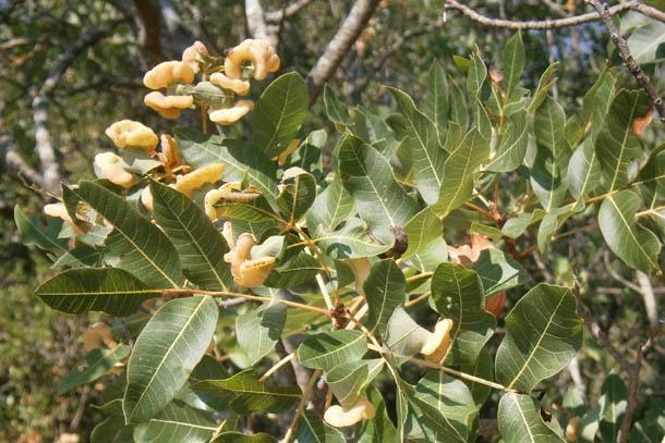 Интересная растительность Греции