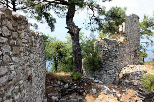 Дерево между древних стен