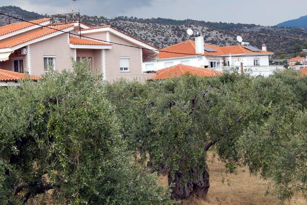 дома и оливковые деревья в Потосе