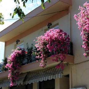 Принос — деревня среди оливковых плантаций