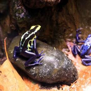 Рептилии и насекомые — подборка фото из зоопарка Риги