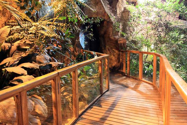 дорожка из дерева в тропическом павильоне