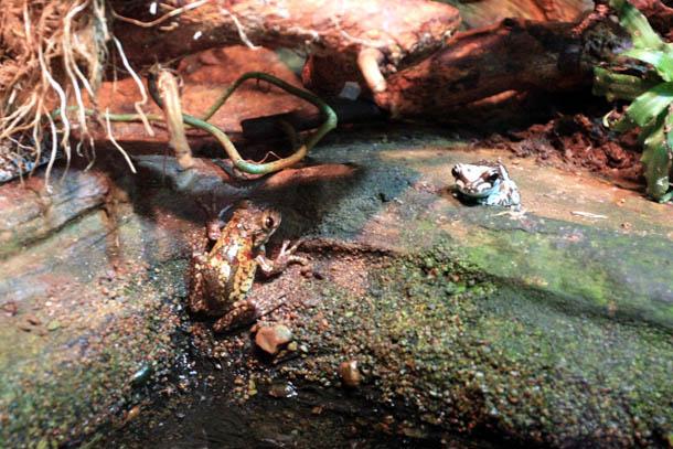 две рептилии в зоопарке