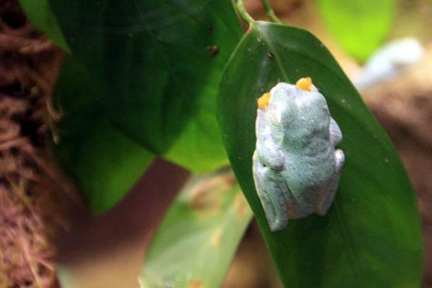 зеленая рептилия с желтыми глазами
