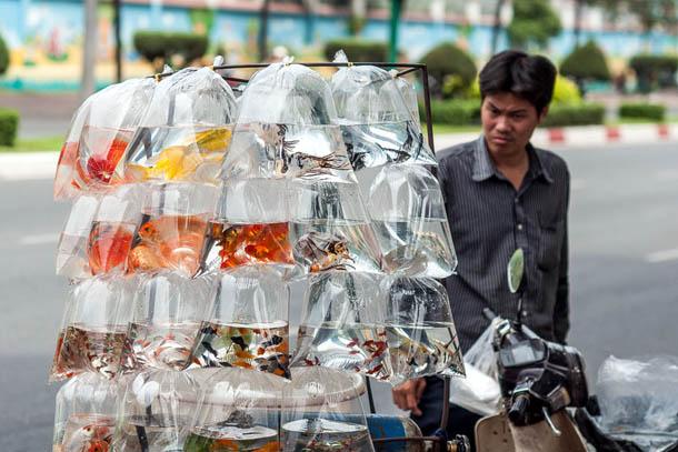 Продавец рыбок, Вьетнам