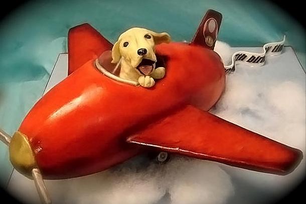 Путешествие с собакой самолетом