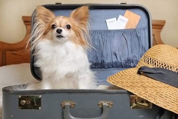 Поселиться с собакой в отеле