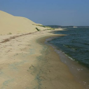 Прогулка по Куршскому заливу: Танцующий лес — Морское
